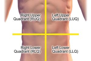 Quadrants of the Abdominal Cavity